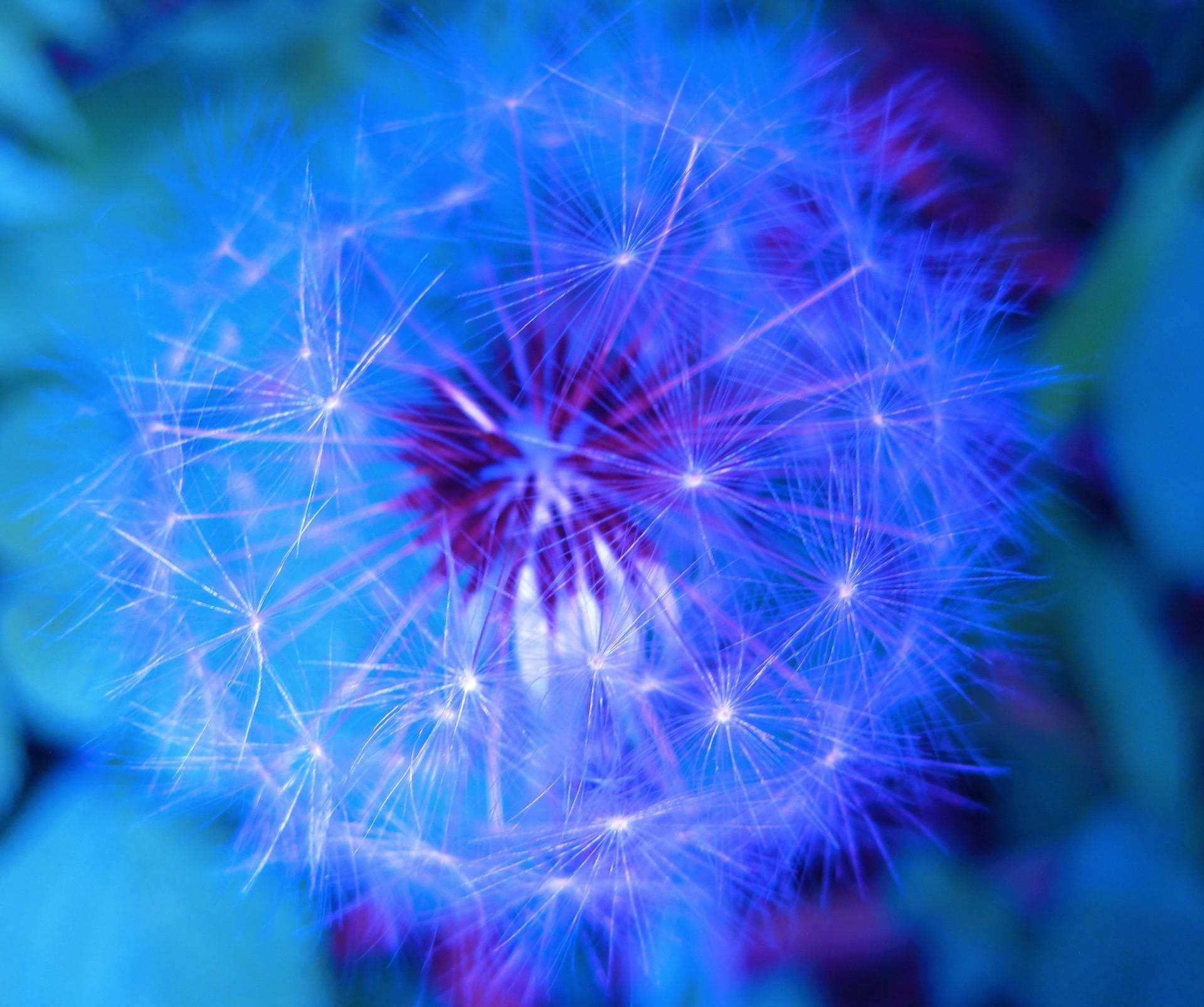 Shutterstock Hd Wallpapers Blue Tinted Dandelion Free Stock Photo Public Domain