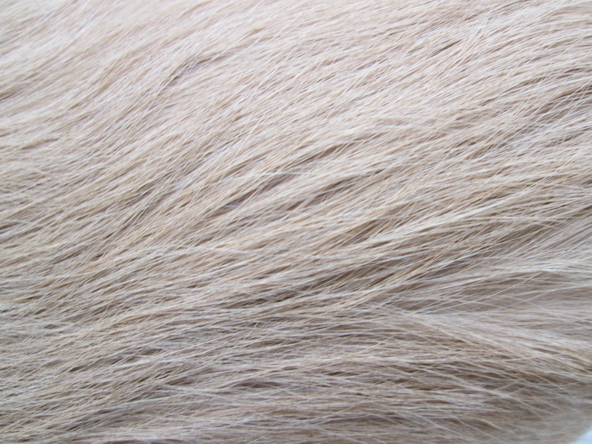Free Animal Wallpaper Backgrounds Dog Fur Texture Free Stock Photo Public Domain Pictures