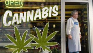 cannabis-300x171