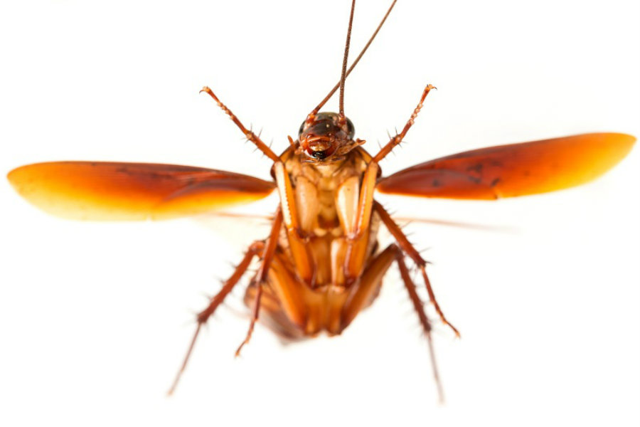 Flying Cockroach Swarms In New York Due To Current Heat Wave