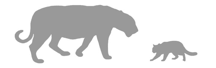 Wild Cat Species Silhouettes