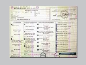 Pumi certificato_pimpy_6