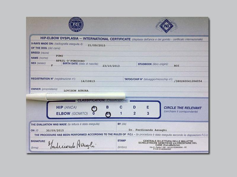 Pumi Certificato April 1