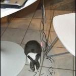 El conejo tenía hambre…