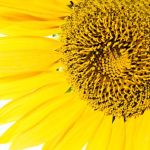 FreePick – Busca imágenes gratis para tu proyecto