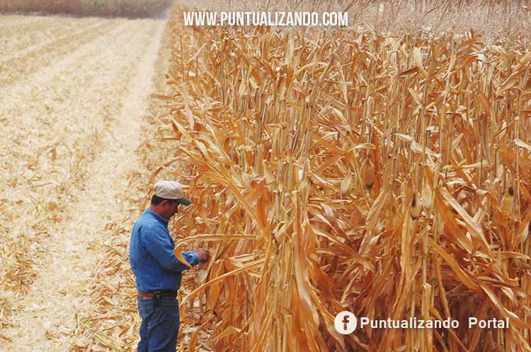 agricultura, agro