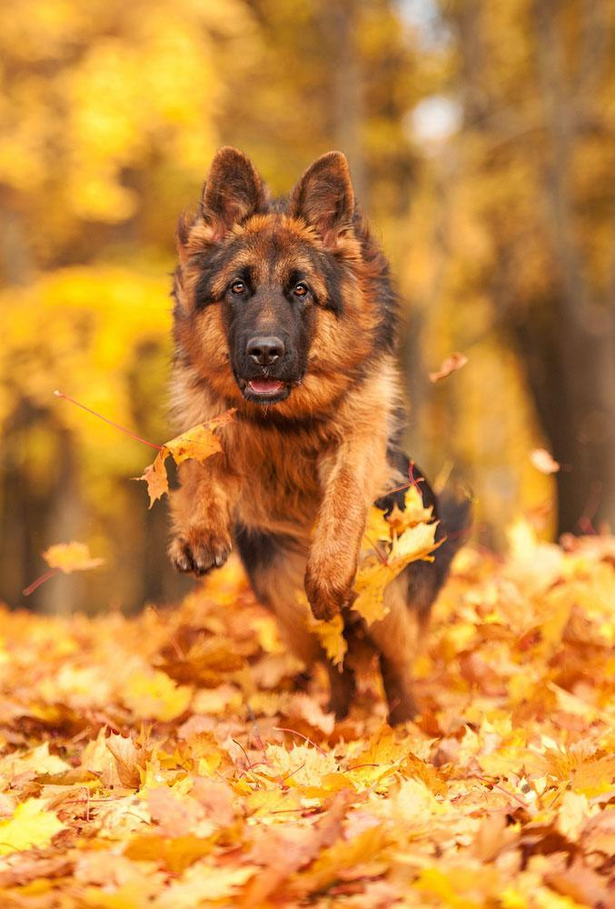Cute Thanksgiving Wallpaper Cat Big Male Dog Names Large Sounding Titles For Your Pup