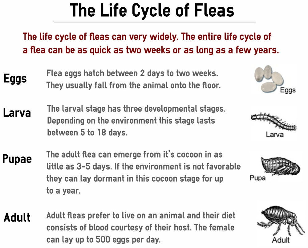 How To Get Rid Of Fleas For Good Puppy Leaks