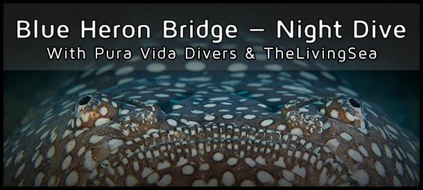 Blue Heron Bridge Night Dive