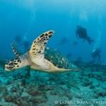 Palm Beach Drift Dive