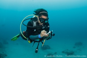Andrea work on her REEF Fish Count