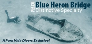 Blue Heron Bridge Dive Speciality