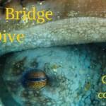 Blue Heron Bridge Twilight/Night Dive: July 3rd