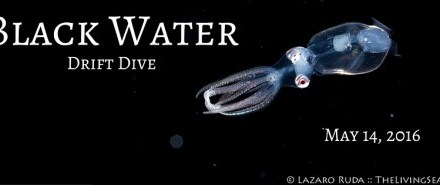 Black Water Drift Dive: May 14th