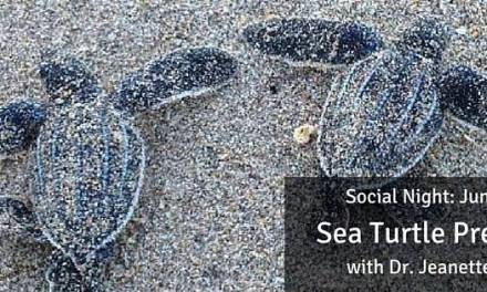 June Social Night: Sea Turtle Presentation with Dr. Jeanette Wyneken