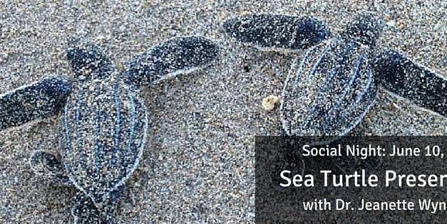 June Social Night: Sea Turtle Presentation with Dr. Jeanette Wyneken