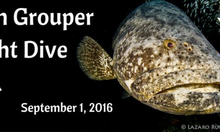 1-Tank Goliath Grouper New Moon Night Dive