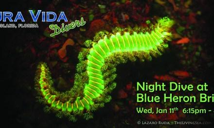 Jan 11: NIGHT DIVE at Blue Heron Bridge