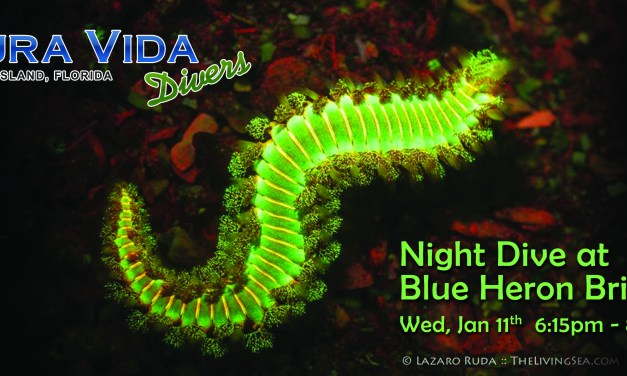 Jan 11: NIGHT DIVE at Blue Heron Bridge
