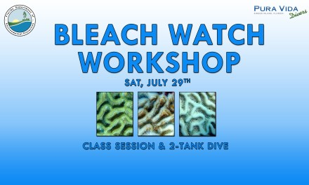JULY 29: BLEACH WATCH WORKSHOP & DIVE