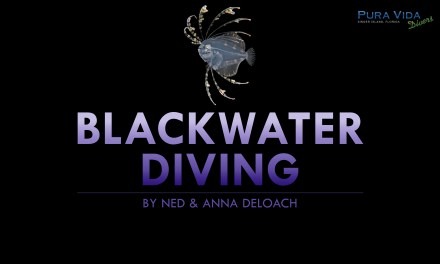 SOCIAL NIGHT: BLACKWATER DIVING BY NED & ANNA DELOACH