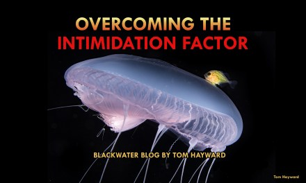 OVERCOMING THE INTIMIDATION FACTOR: BLACKWATER DIVING