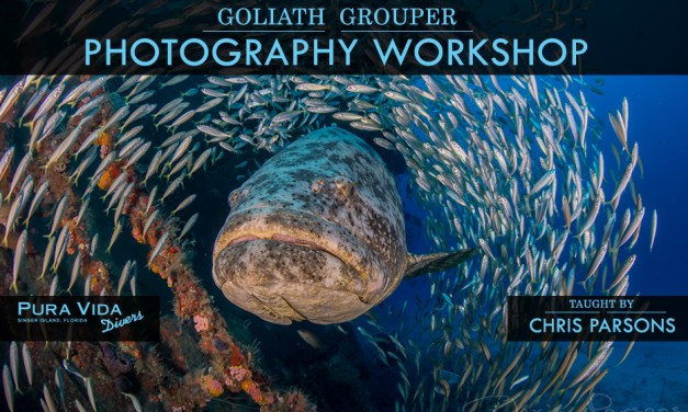 GOLIATH GROUPER PHOTOGRAPHY WORKSHOP
