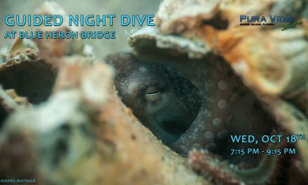 OCT 18: GUIDED NIGHT DIVE AT BLUE HERON BRIDGE