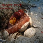 DEC 2: GUIDED NIGHT DIVE AT BLUE HERON BRIDGE