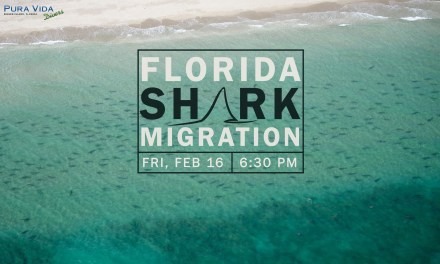 SOCIAL NIGHT: FLORIDA SHARK MIGRATIONS