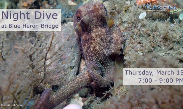 MARCH 15: GUIDED NIGHT DIVE AT BLUE HERON BRIDGE