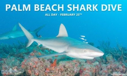 FEB 25: PALM BEACH SHARK DIVE