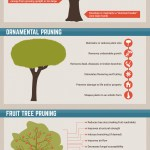 UFP_Pruning_Infographic