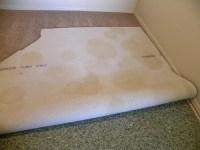 Dog Urine In Carpet