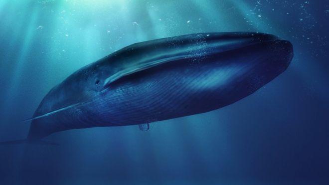 Juego la ballena azul.Foto Getty Images. bbc.comjpg