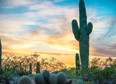Arizona-