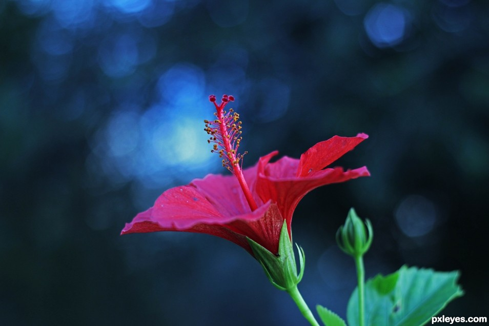 Hd Wallpapers For Laptop 15 6 Inch Screen Bokeh Picture By Funkygirl4ever95 For Single Flower