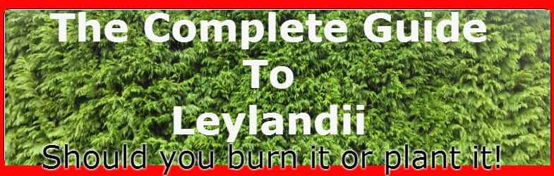 Leylandii – Your complete guide including growing tips, propagation and pruning