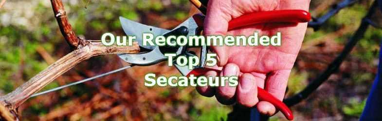Top 5 best secateurs