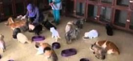 فيديو : أردنية تأوي 224 قطة ضالة في منزلها