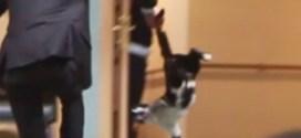 فيديو : جلسه مجلس النواب الاردني تتعطل بسبب قطه !