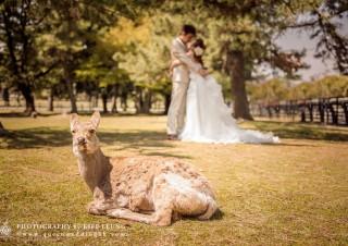 cn-hk-hong-kong-professional-photographer-pre-wedding-oversea-海外-婚紗婚禮攝影-0039