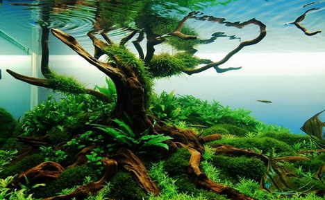 Samsung Mobile 3d Live Wallpaper Beautiful Aquascaping Photo Collection Quertime