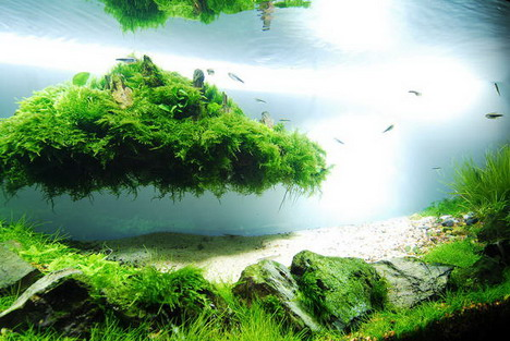 Download Wallpaper Aquarium 3d Beautiful Aquascaping Photo Collection Quertime