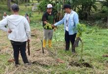 Instituciones continúan con el proyecto de forestación y reforestación