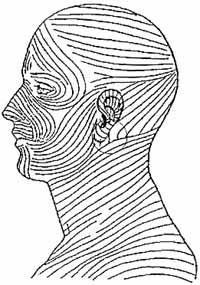 langers lines diagram