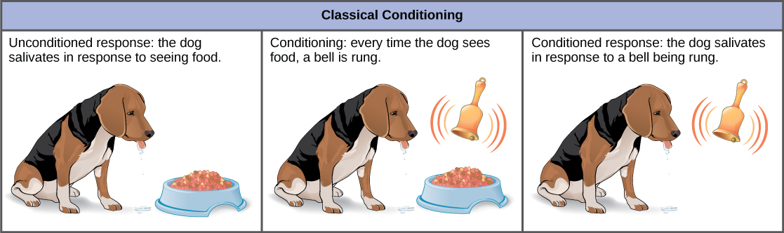 Classical conditioning, Behavioral biology proximate and, By - examples of classical conditioning
