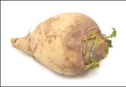 Comment se nomme ce légume ?