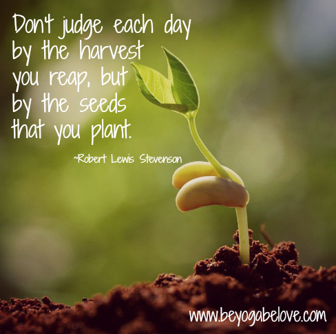Comfort Zone Motivational Quotes Wallpaper Quotes About Planting Seeds 58 Quotes