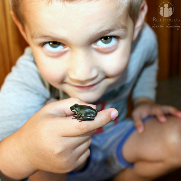 Raising frogs and froglets homeschool